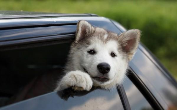 Cachorrito-2